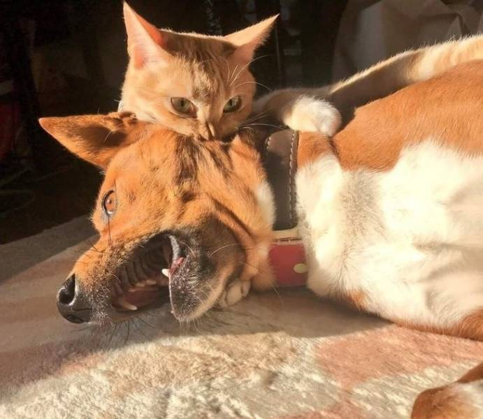 Animals Who Don't Care About Order In This World