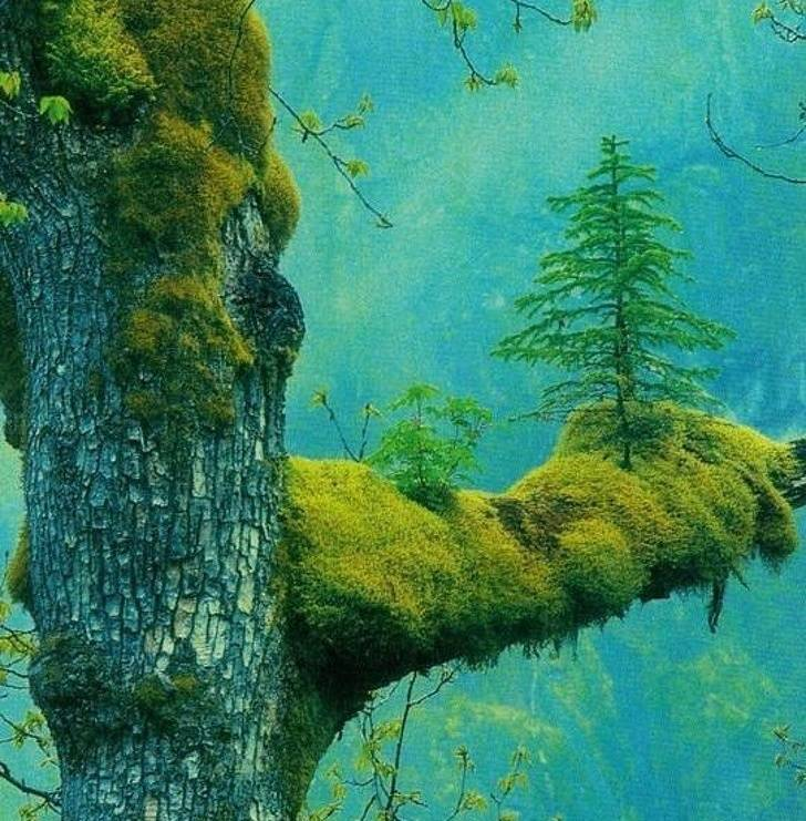 Nature Is Far More Powerful Than We Are