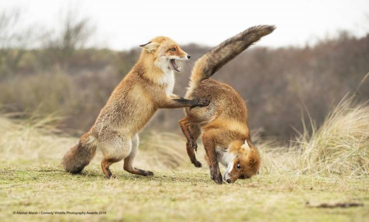 """""""Comedy Wildlife Photography Awards"""" Chooses Most Hilarious Wildlife Photos Of The Year"""