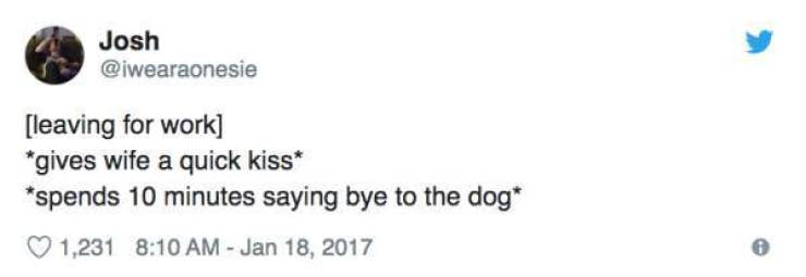 Dogs Are Really Special To These People