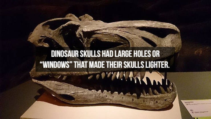 Dinosaur Facts? Anytime!