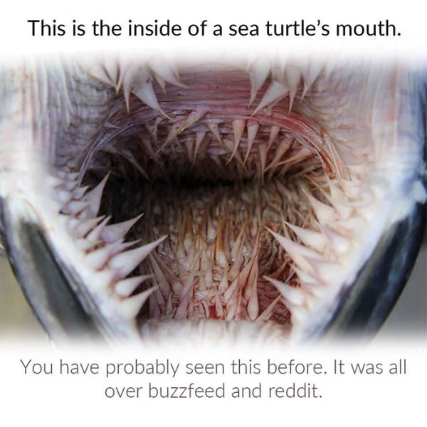 Biologist Explains Why Sea Turtles Have Such Awful-Looking Mouths