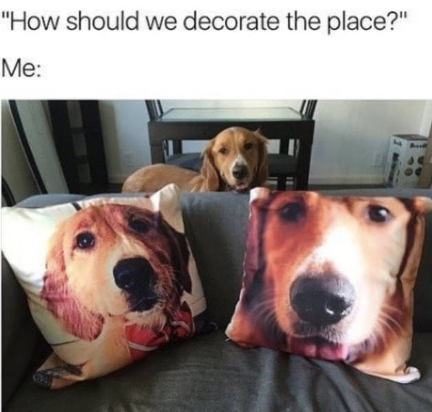 Share These Memes With Your Dog