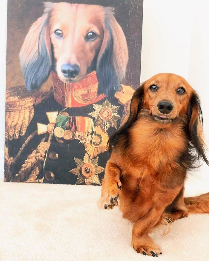 Your Pet Can Be A Royal Too!