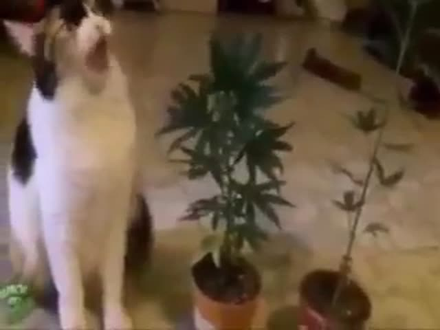 Go Home Cat, You Are Drunk