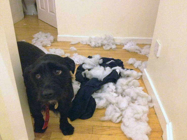 These Dogs Totally Didn't Mean To Do That…