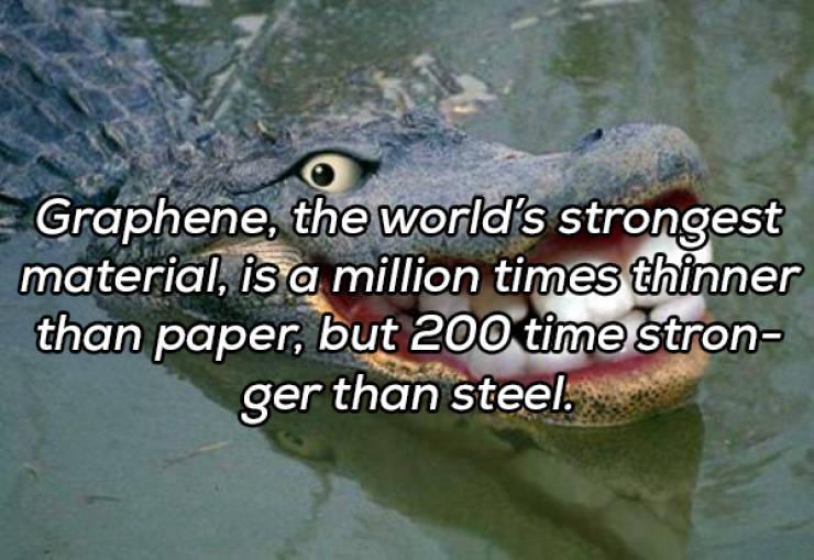 Useless Facts Are Still Interesting