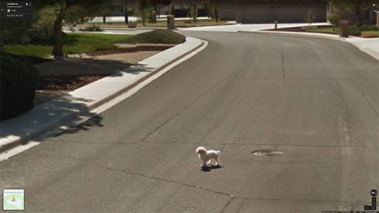 You Can Find Anything You Want On Google Maps