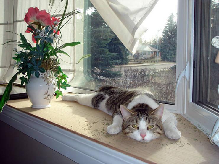 Cats, Don't Do Catnip