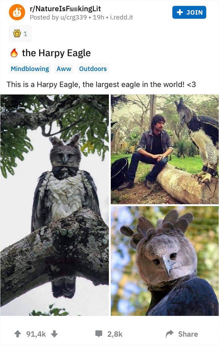 Harpy Eagle Is A Pretty Big Bird…