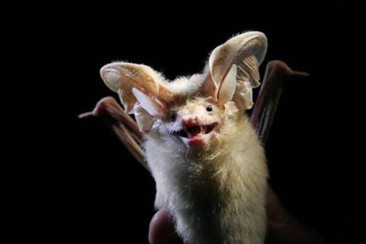 Echolocate These Bat Facts