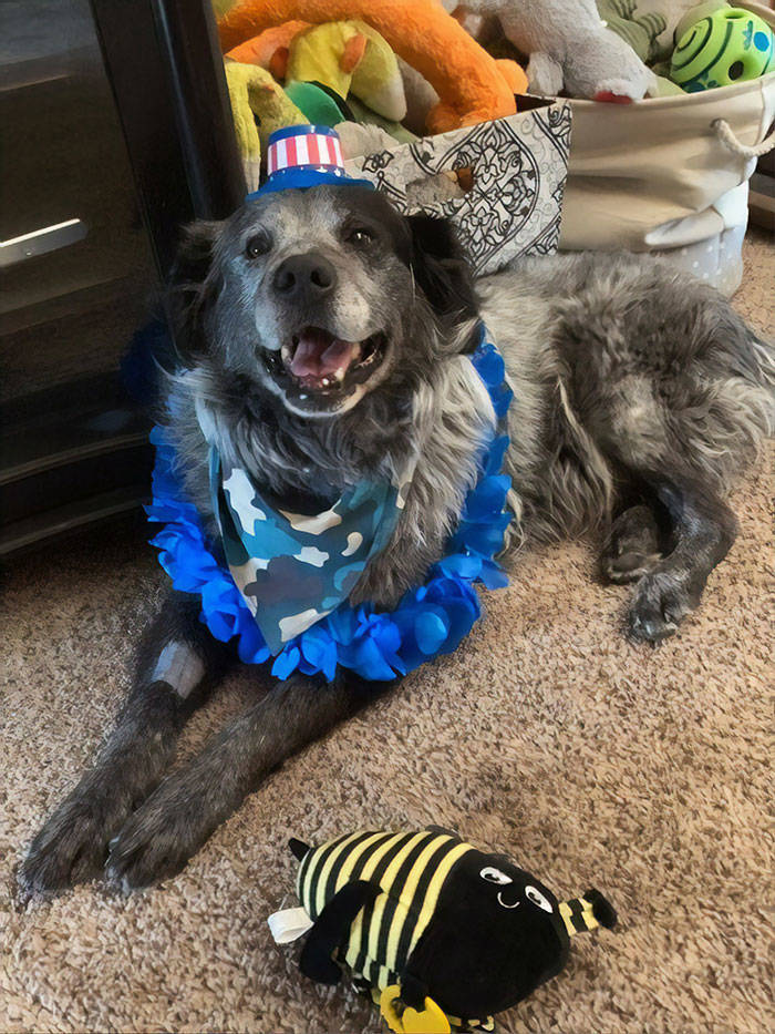 This Mistreated Dog Was So Happy To Be Adopted!