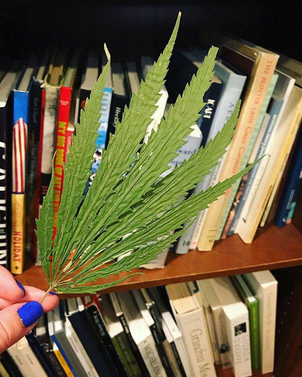 The Secrets Of Second-Hand Books