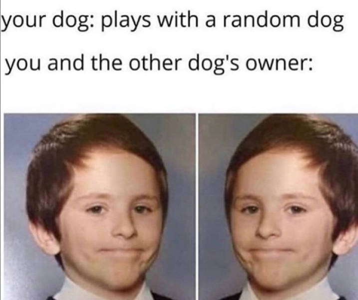 At Least Your Dog Will Find These Memes Relatable