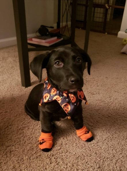 Dogs Wanna Have A Halloween Too!