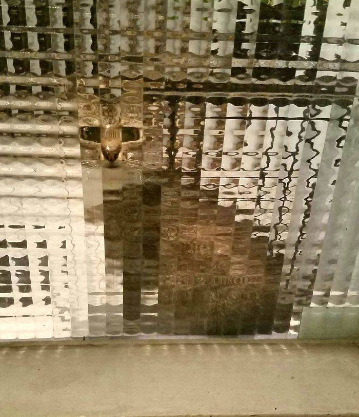 These Cats Are Pixelated!