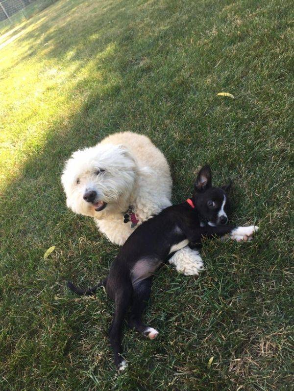 Dogs Just Wanna Be Friends!