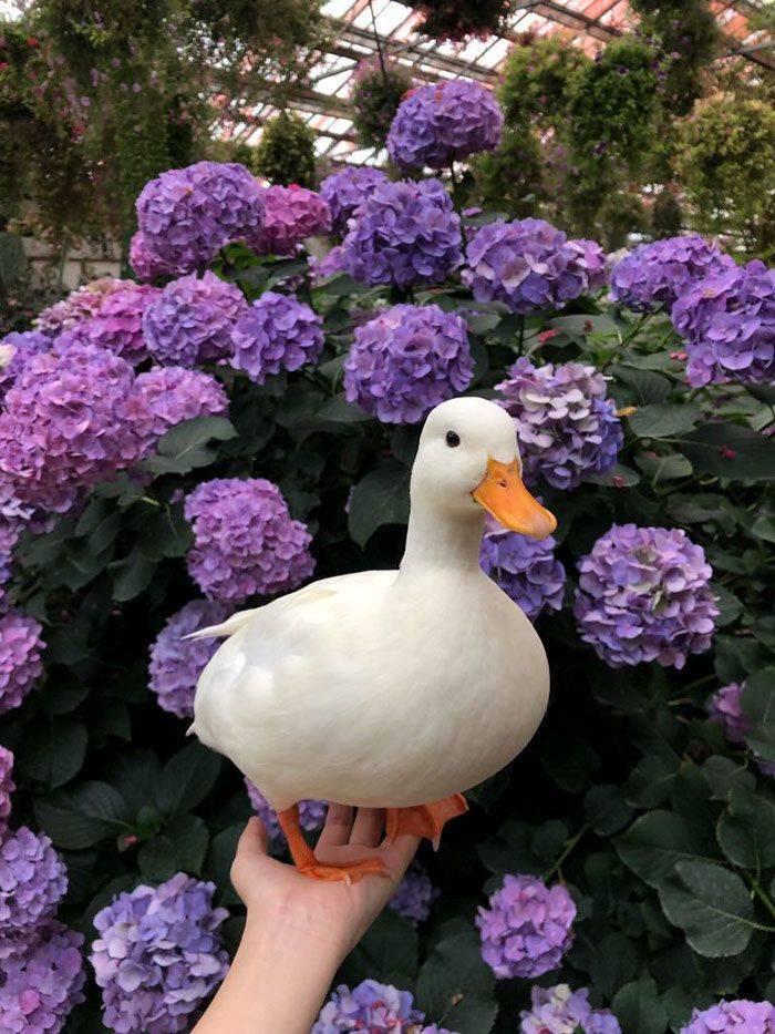 Ducks Are Always Cute!
