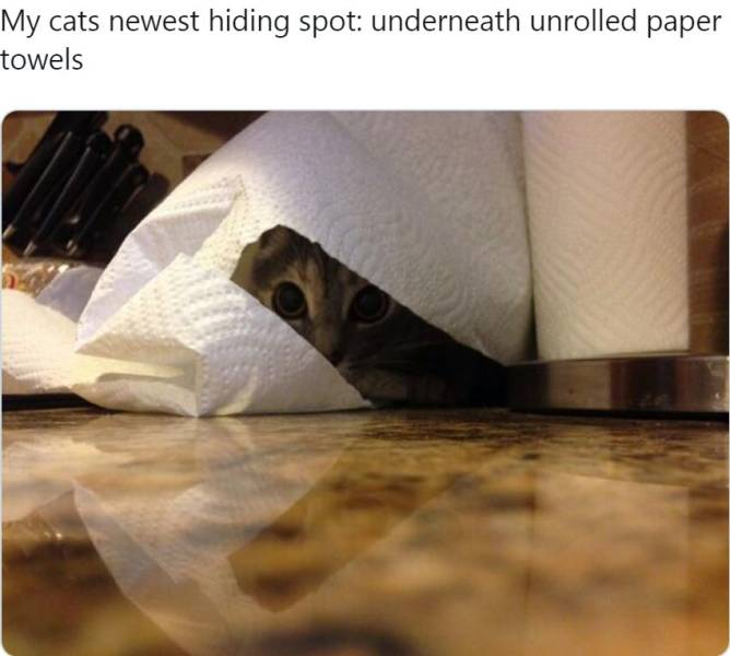 Cats Are Constantly Hiding…