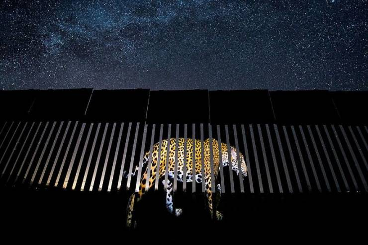 Here Are Your Wildlife Photographer Of The Year 2019 Winners!