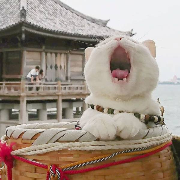 They Even Have A Cat Shrine In Japan!