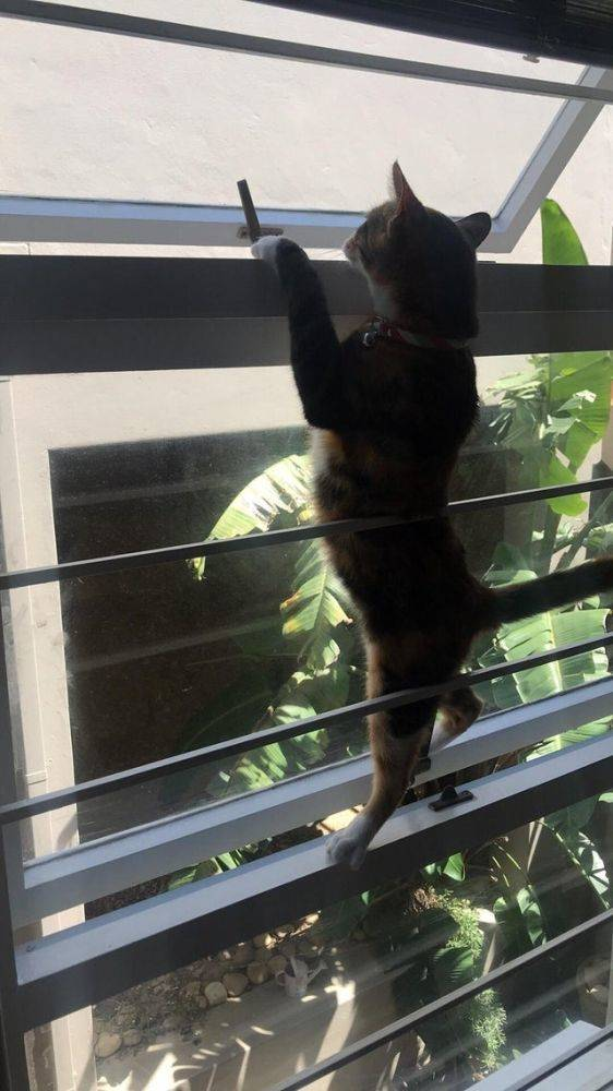 Cats Who Just Wanna Spend A Few Of Their Nine Lives