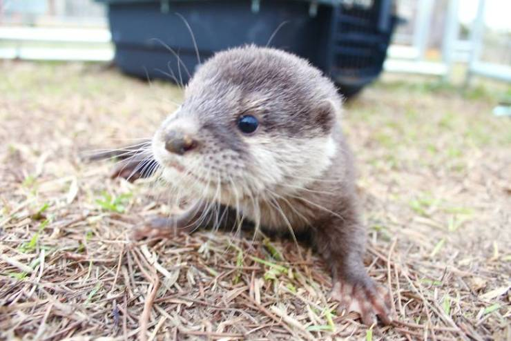 Wanna Swim With Little Otters?