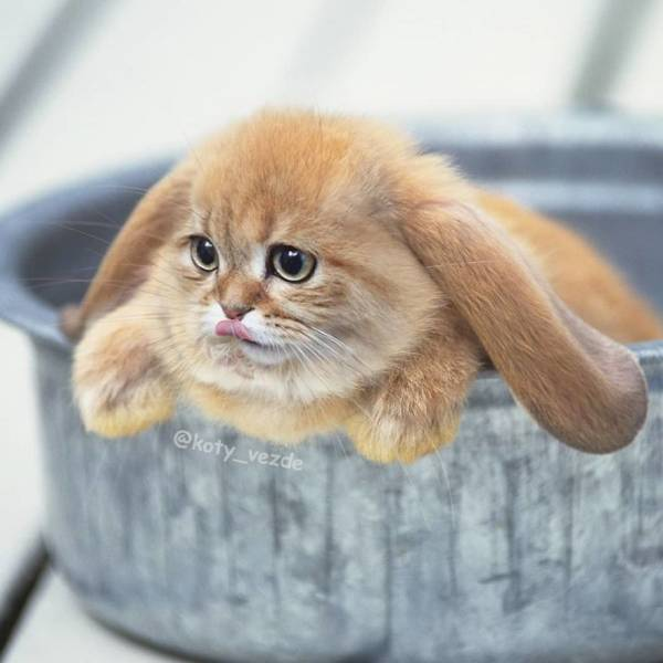 What If Everything Had A Cat Face On It…