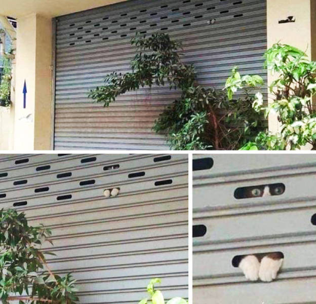 Your Pets Are Always There To Surprise You