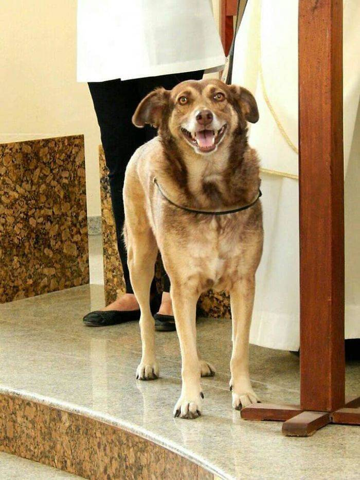 Abandoned Dogs Are Welcome In This Brazilian Priest's Church