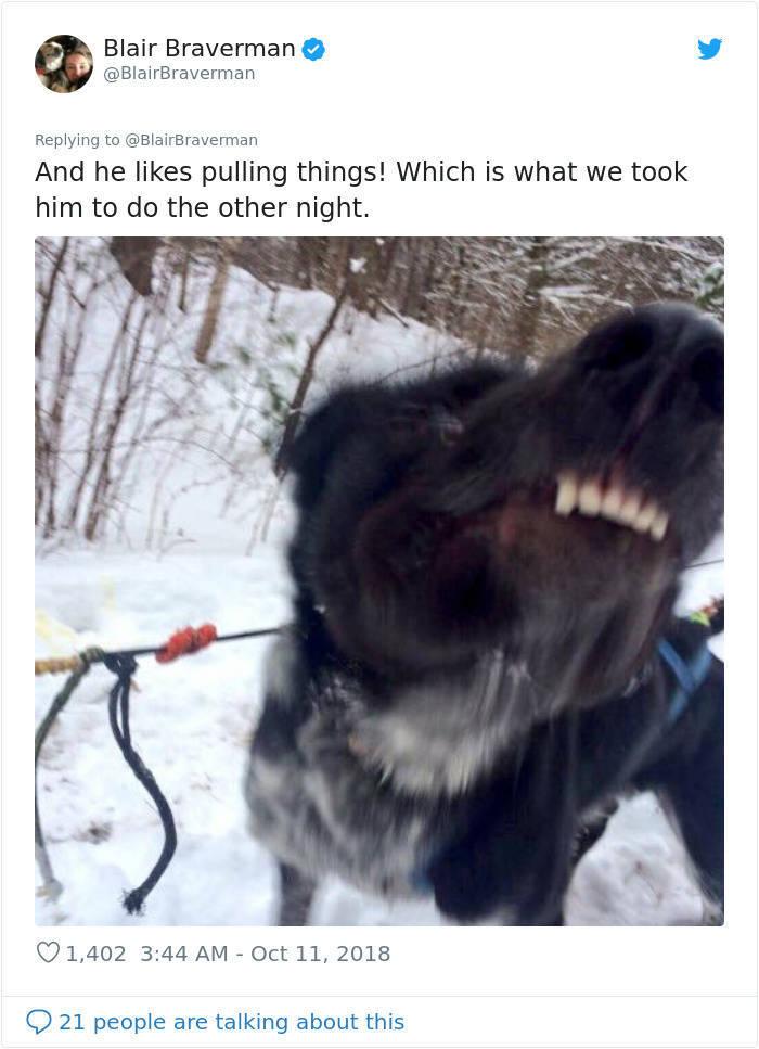 Meet Grinch, A Very Dumb Sled Dog