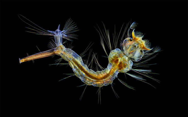 "Take A Look At These Tiny ""Nikon Small World 2019"" Winners"
