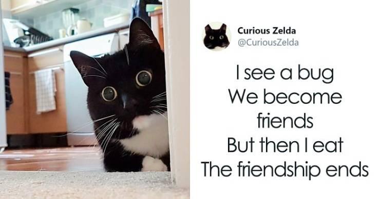 Zelda The Cat Is The New Twitter Heroine