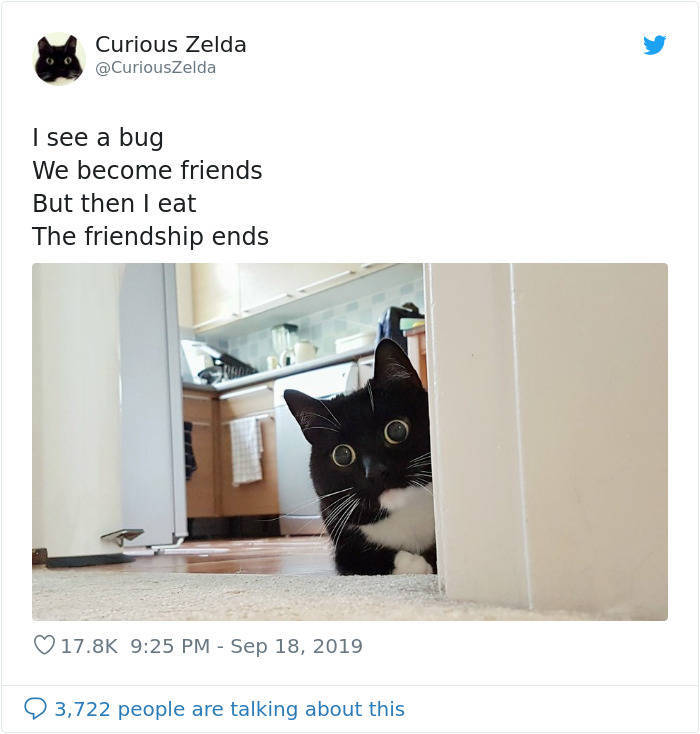 Zelda The Cat Is The New Twitter Heroine
