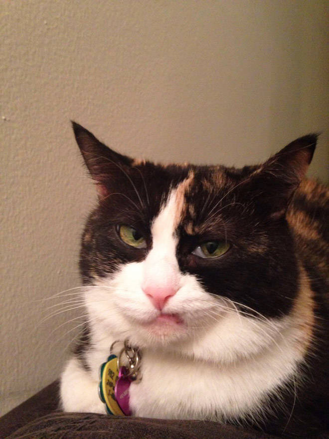 These Cats Are Definitely Not Mad At You