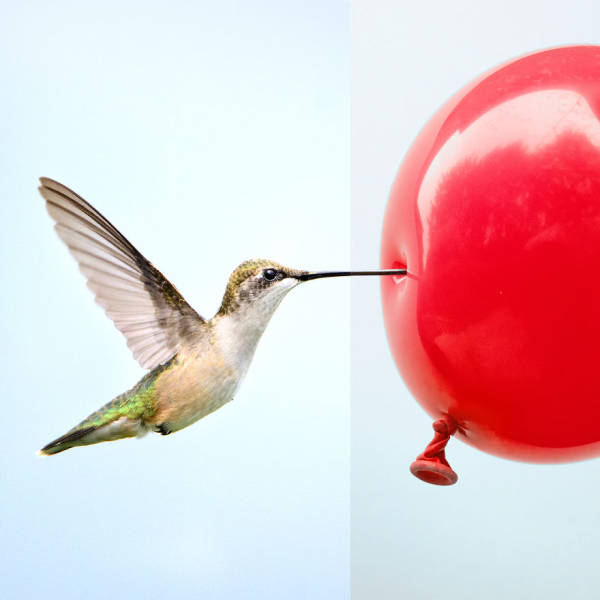 Photo Mash-Ups That Look Very Real Until You Look For The Second Time