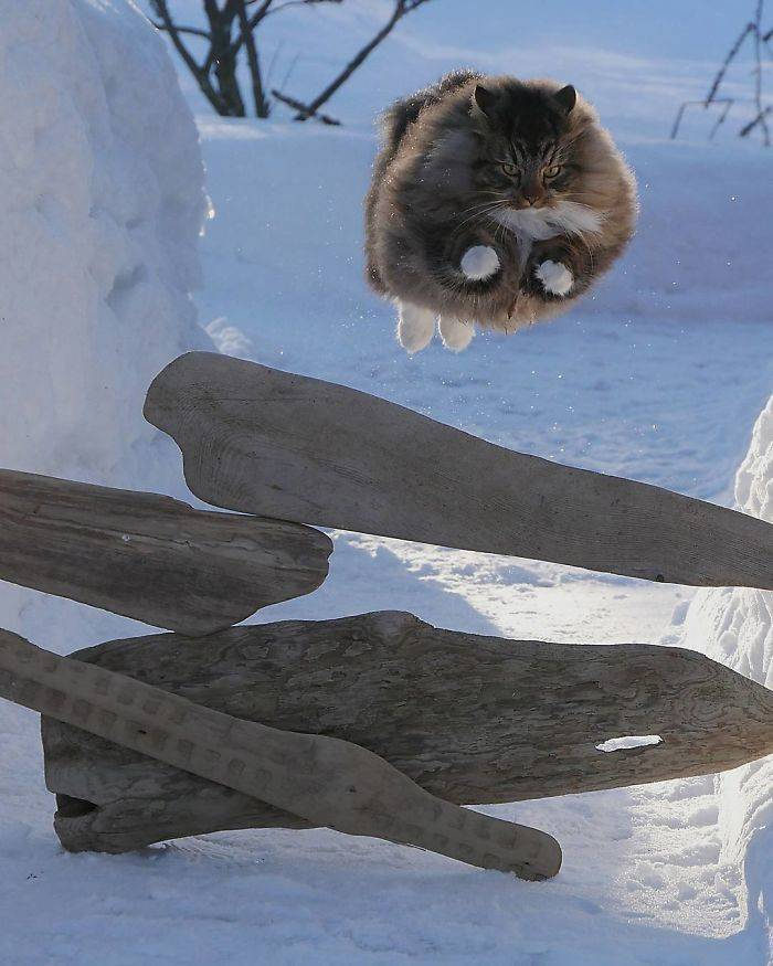 These Finnish Cats Know – The Furrier You Are, The Funnier You Are