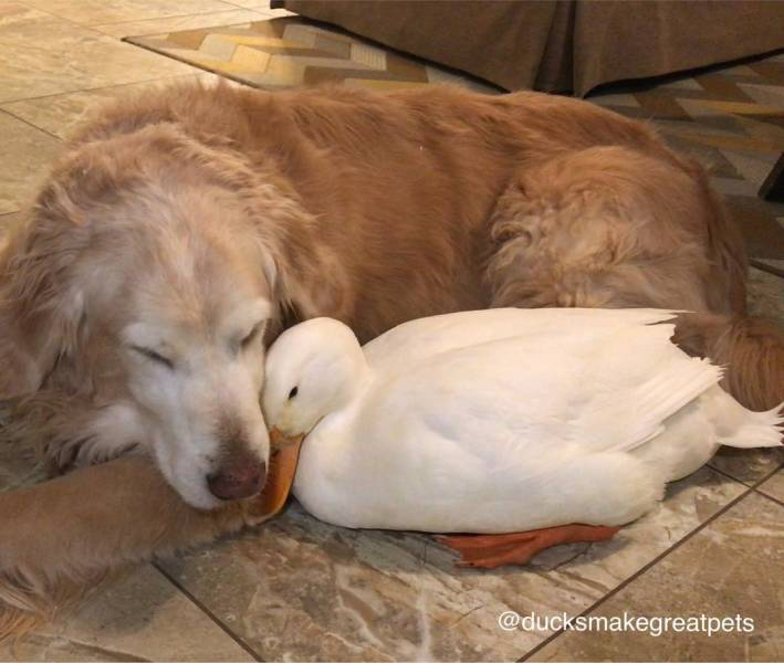 True Friendship Is Limitless