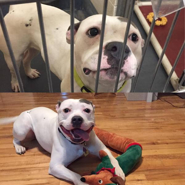 Dogs Love Being Adopted!