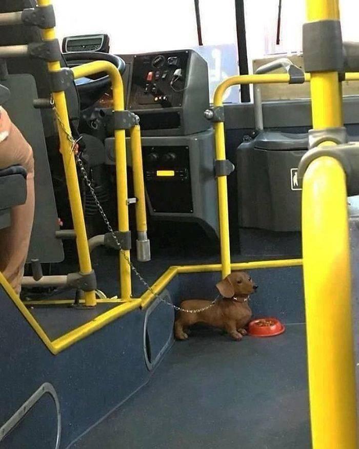 All The Weird Humans Of Public Transport…