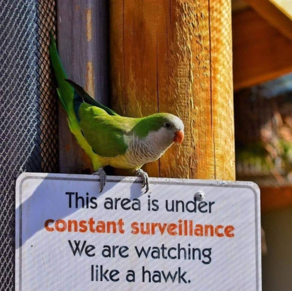Birds Are Always There, Watching You VERY Closely