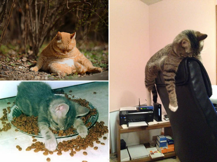 Animals Who Regret Their Last Night's Decisions