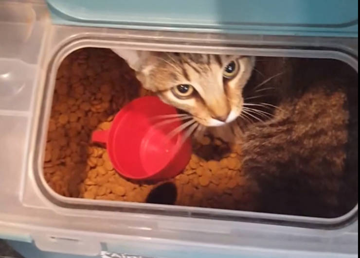 Cats Don't Care About What You Want