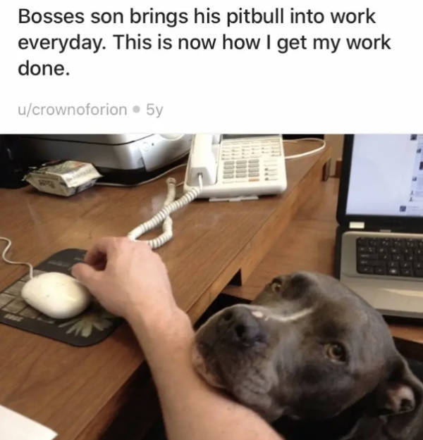 Pit Bulls Can Be Intimidating, But They Are Still Good Boys