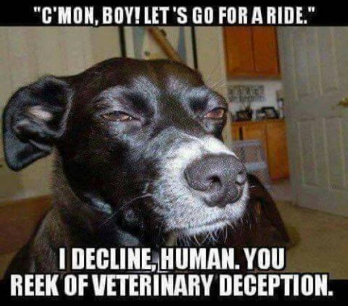 Wag Your Tail At These Dog Memes