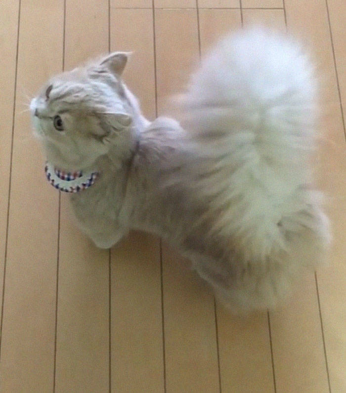 Is It A Cat, Or Is It A Squirrel In Disguise?