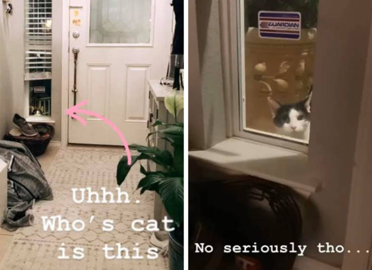This Cat Is A Very Persistent One