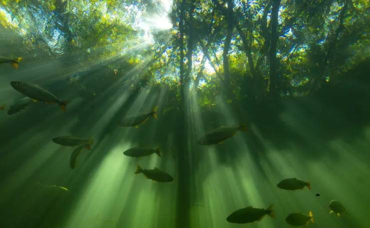 Naturally, These Facts About Nature Are Real