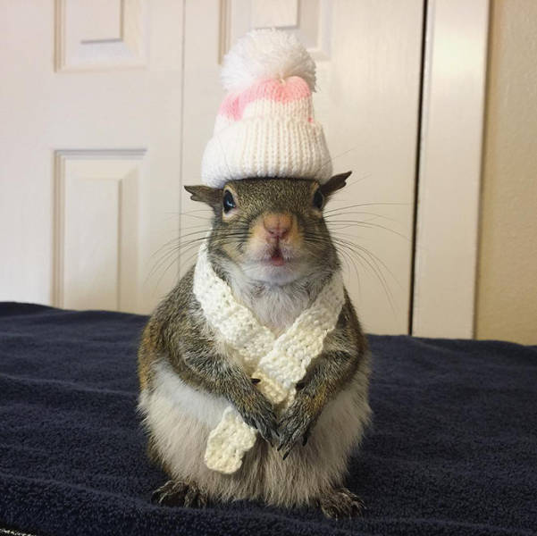 This Saved Squirrel Is Rapidly Turning Into A Celebrity