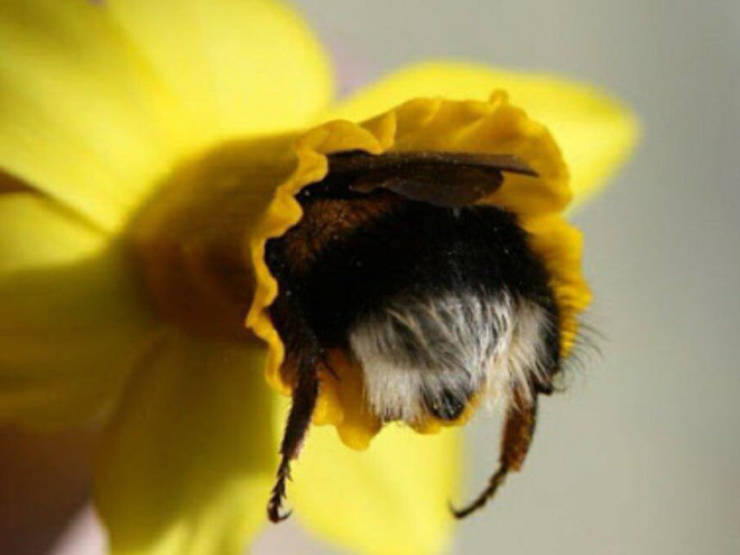 These Tired Bees Could Be Your Spirit…Insects?